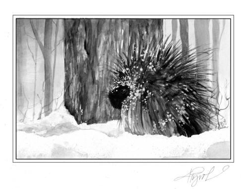 porcupinepix