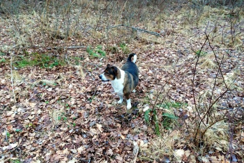Oliver in leaves