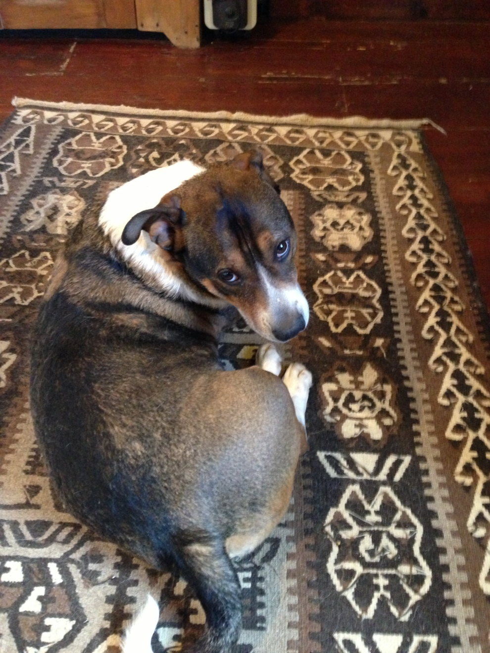 dog:rug