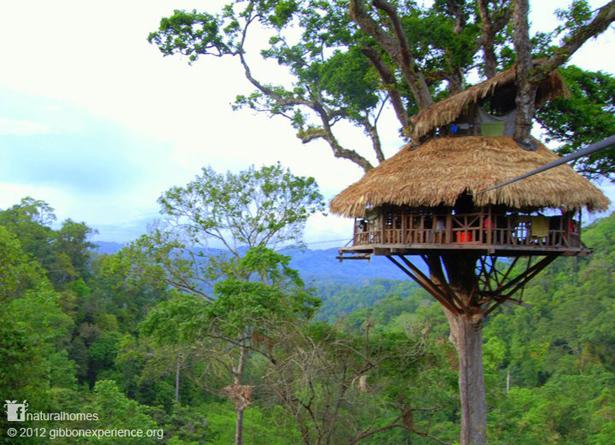 Laos treehouse