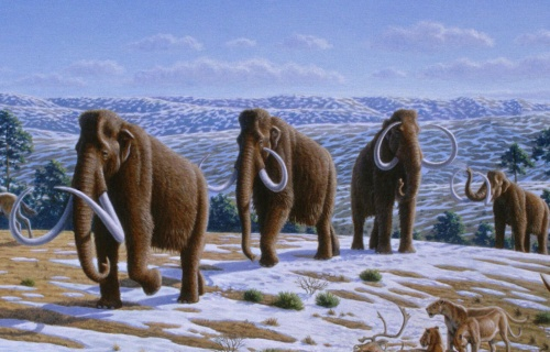 Woolly_mammoth_Mammuthus_primigenius_-_Mauricio_Antón