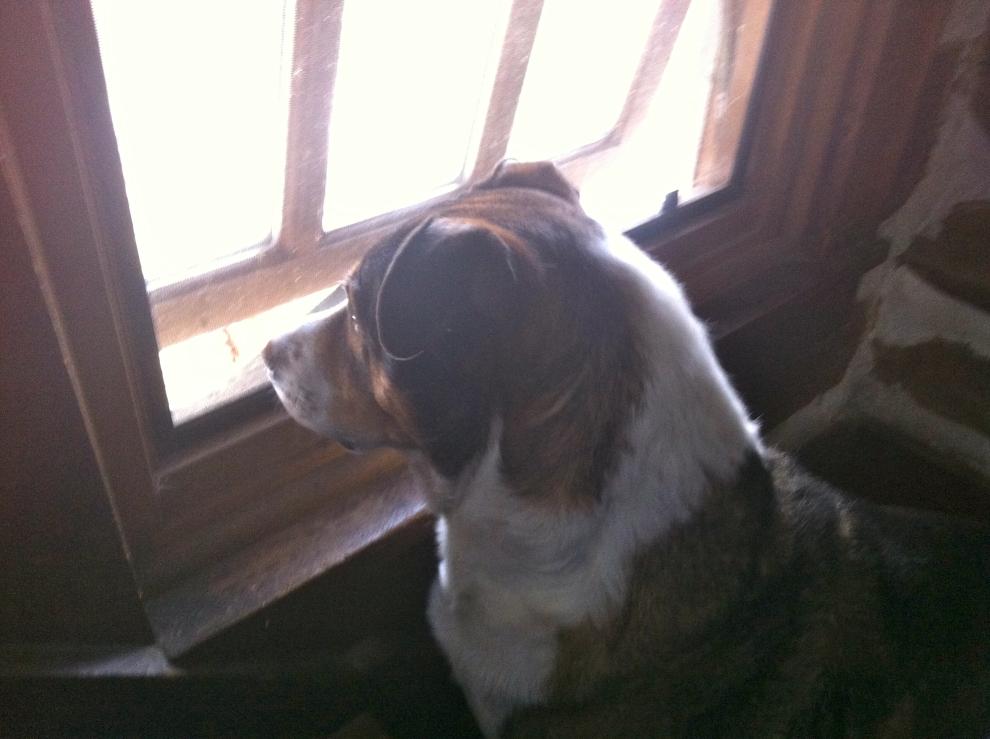 O at Window