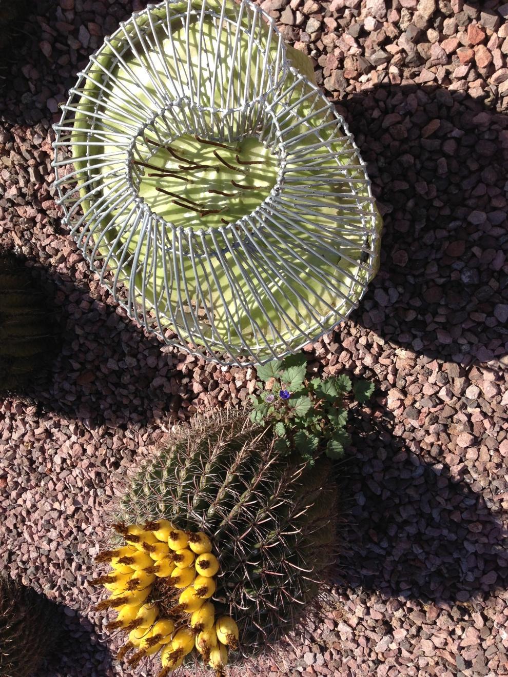 sculpture:cactus