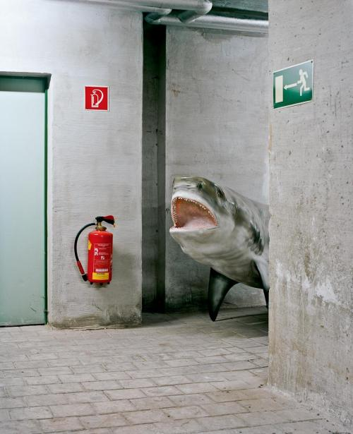 basement shark, 2011.jpg.CROP.article920-large
