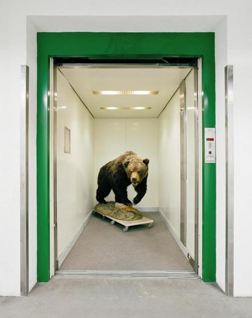 elevator bear.jpg.CROP.article920-large