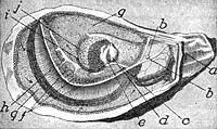 oyster_diagram