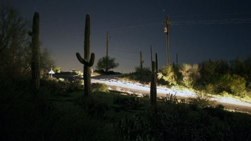 cactus at night