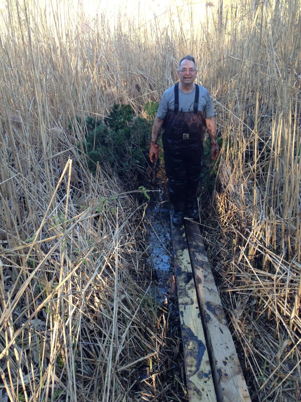 gil swamp