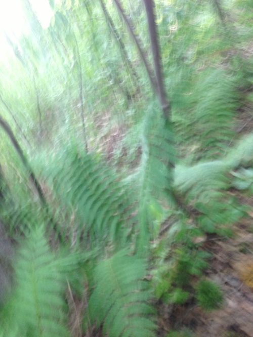 blurred fern whirl