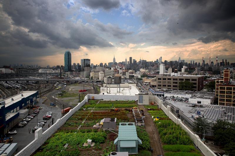 Brooklyn-Grange-by-Cyrus-Dowlatshahi2
