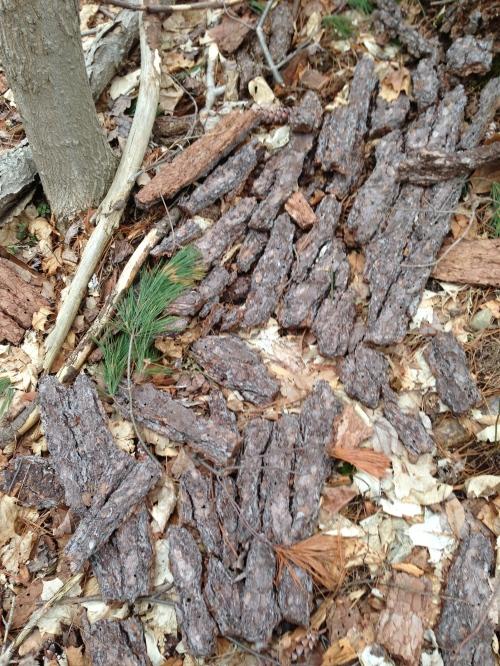 fallen bark