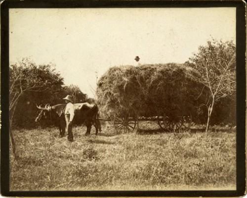 Farming-Scene