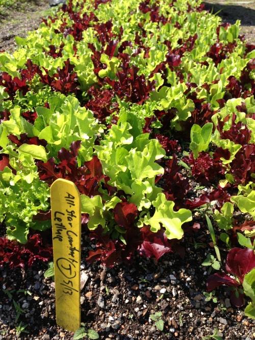 lettuce w sign