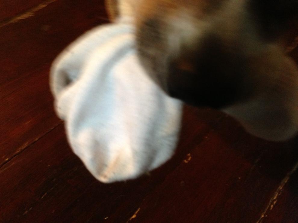 Ollie nose sock