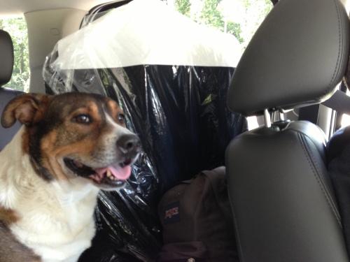oliver back seat