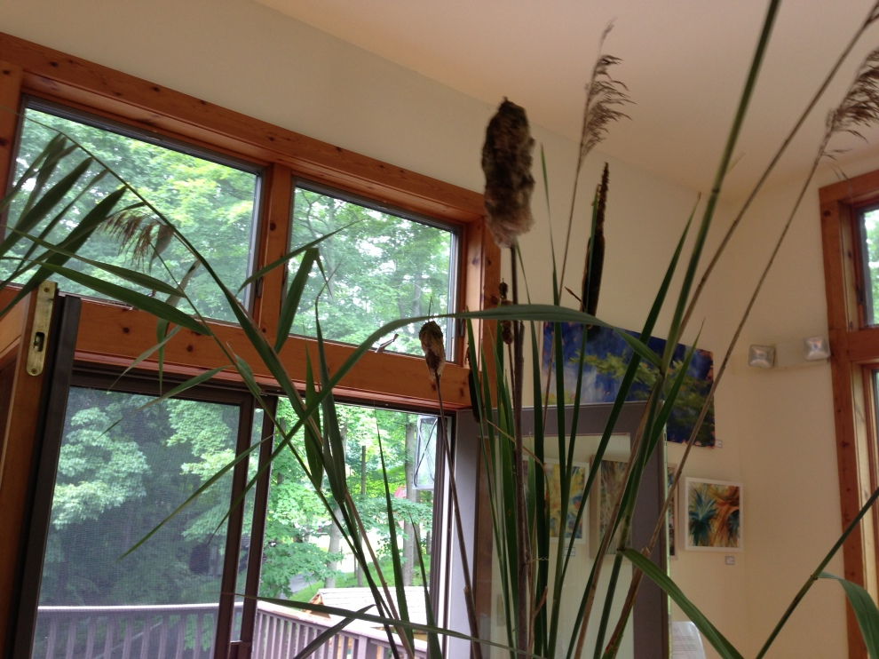phrags:cattails