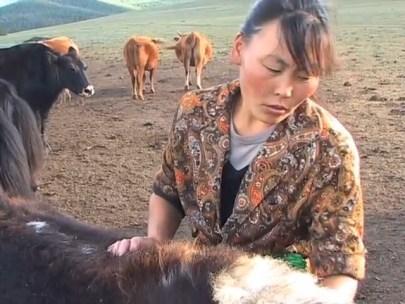 living-with-herds-vocalisation-dictionary-natasha-fijn-2