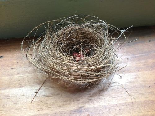 small nest