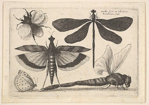 Wenceslas Hollar, 1646