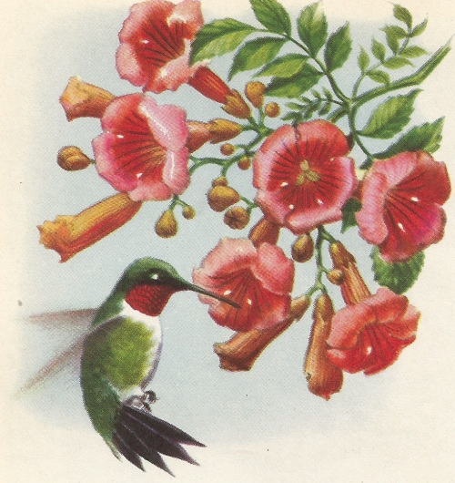 Bird hum
