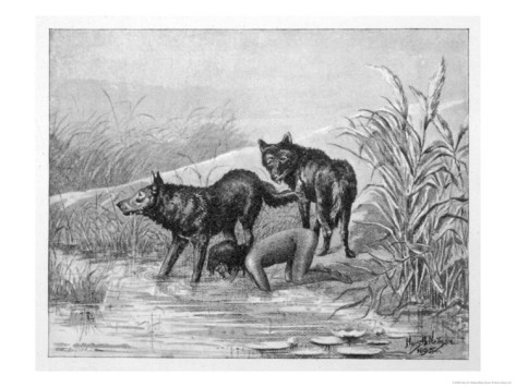 harry-b-neilson-feral-child-drinking-with-wolf-cubs-3-of-5