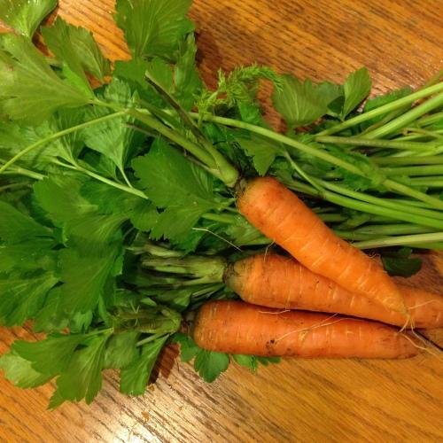 carrots:celery