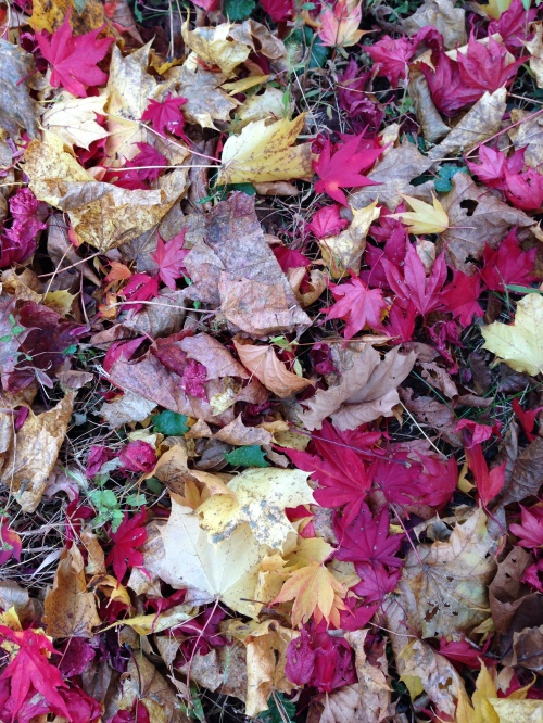 leaves underfoot
