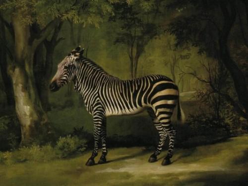 stubbs-zebra