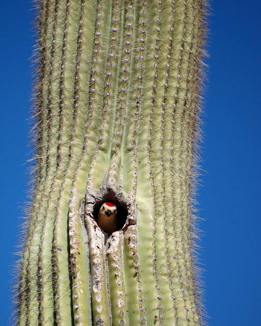 bird1(woodpecker)
