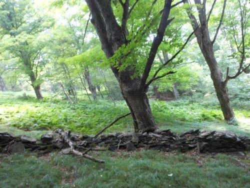 Bovina LEANING FOREST