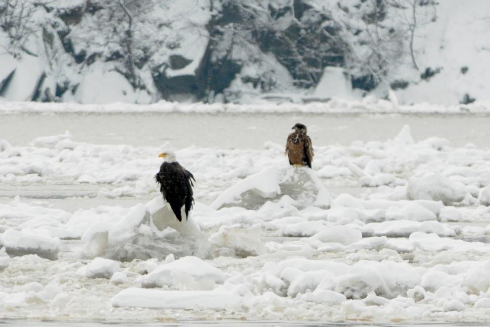 eagles-on-ice-018