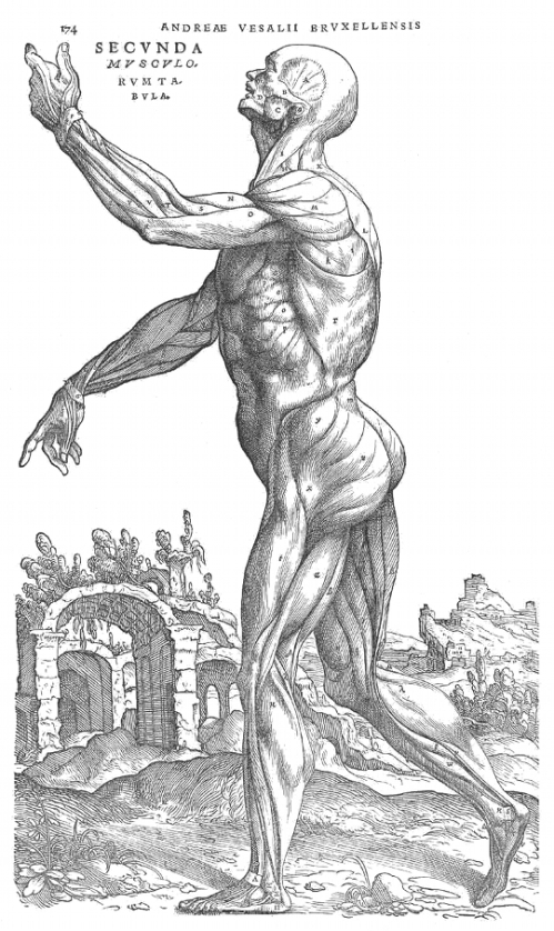 vesalius 1