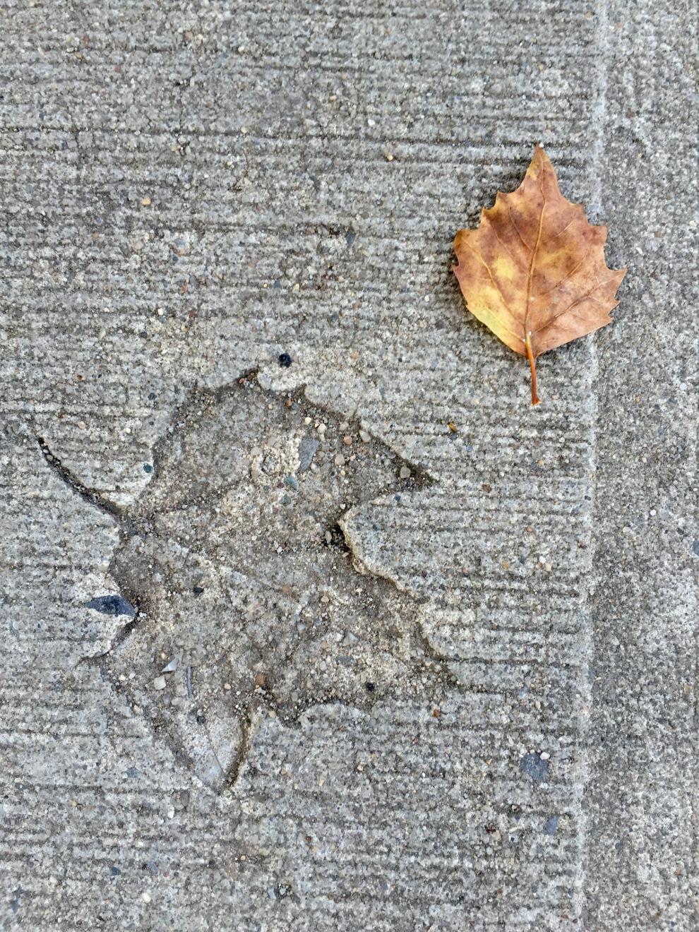 leaf in concrete
