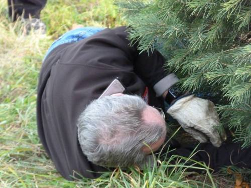gil cutting tree