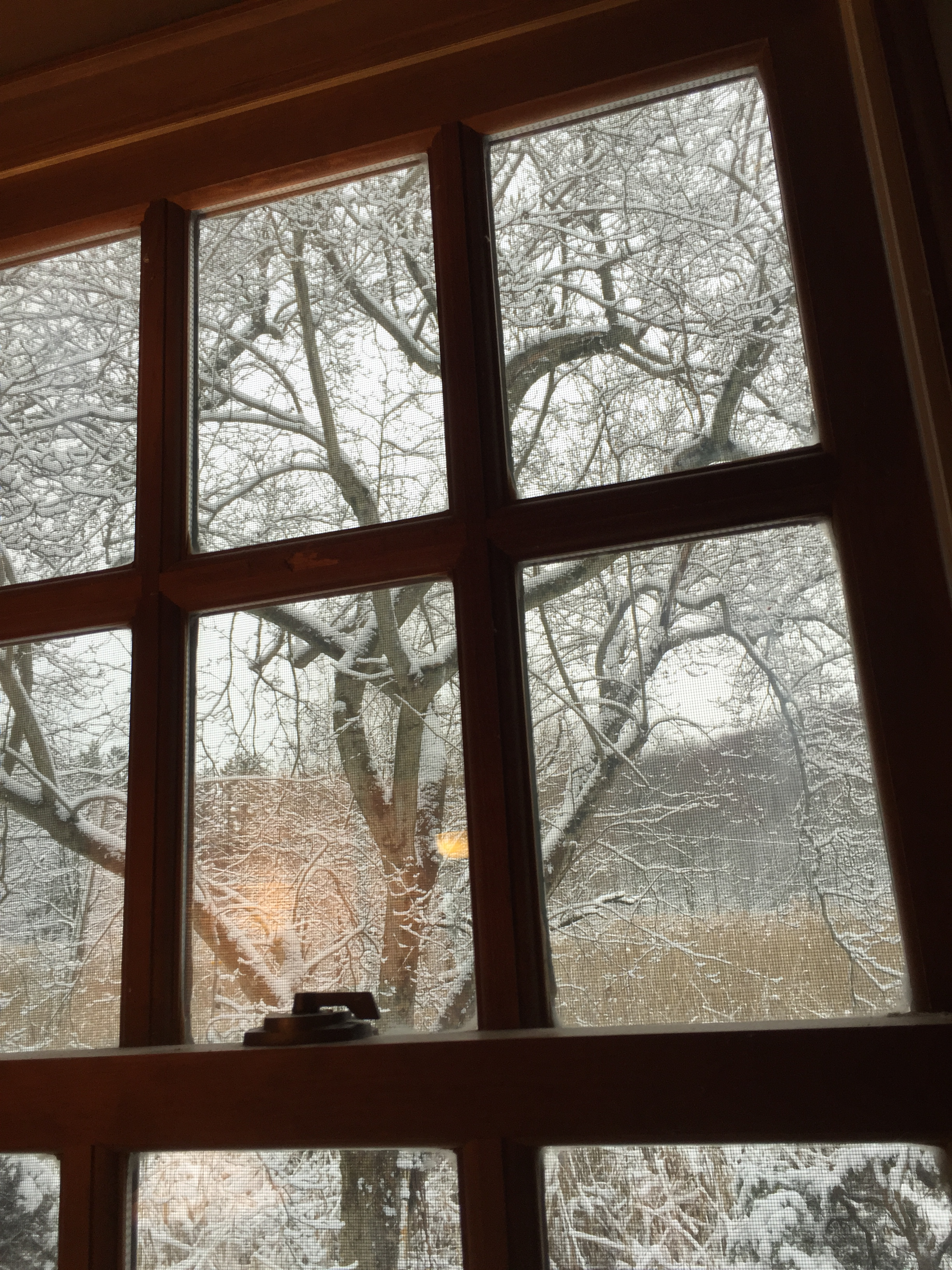 snow window.JPG
