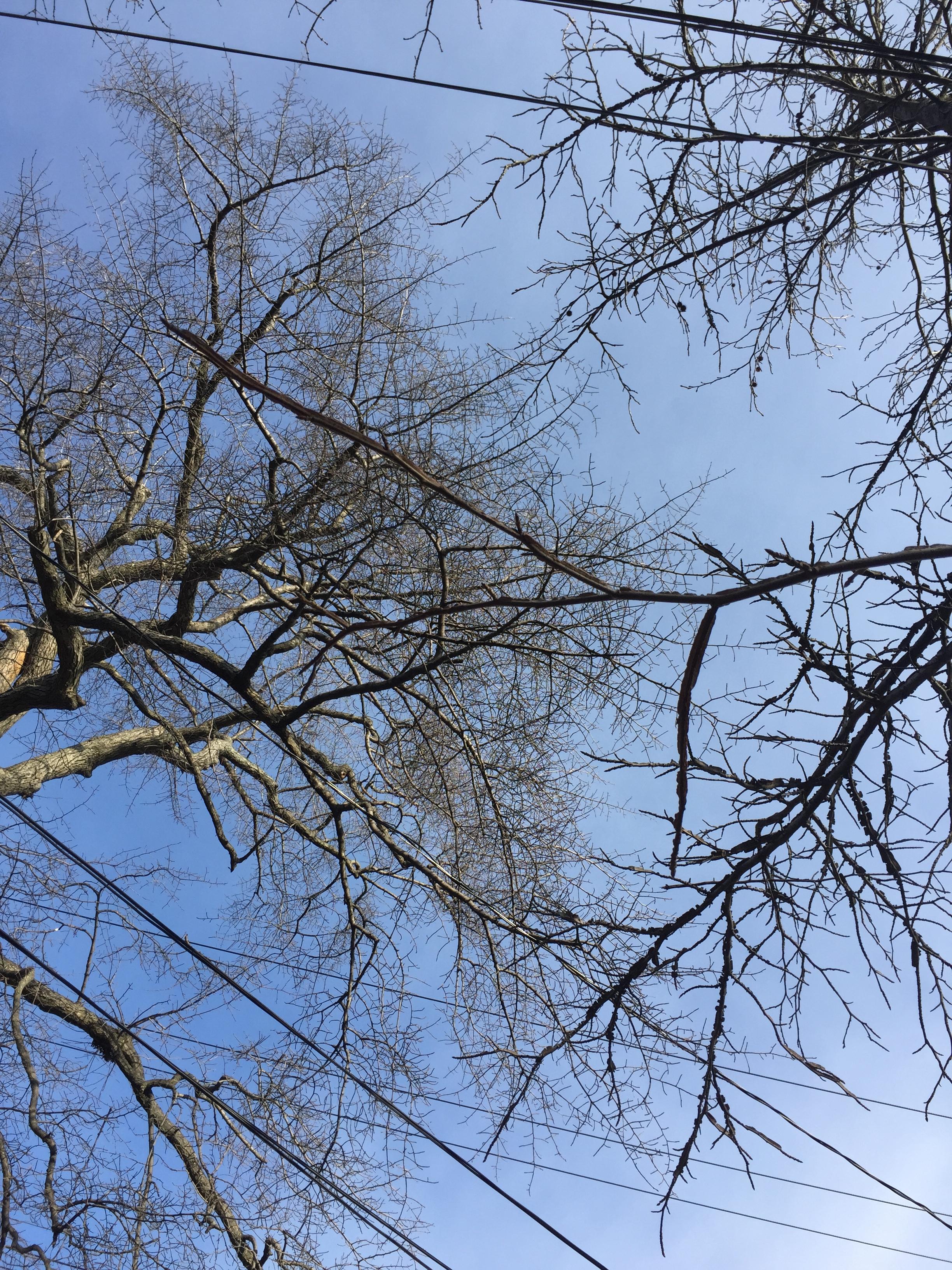 tree brnches.JPG